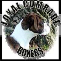Visit Loyal Comrade Boxers Online